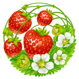 Vector strawberry round composition Stock Image