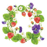 Vector strawberry round frame. Royalty Free Stock Images