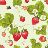 Vector strawberry seamless pattern. Stock Image