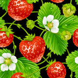 Vector strawberry seamless pattern on white backgr. Vector strawberry seamless pattern isolated on black background Royalty Free Stock Images
