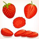 Vector strawberry. Sliced, whole, half strawberry. vector illustration