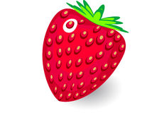 Vector  strawberry on white background. Strawberry on white background Stock Images