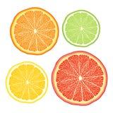 Vector stylised orange, lemon, grapefruit, lime on stock illustration