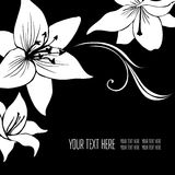 Vector stylish black floral background Stock Images