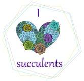 Vector succulent card, print, illustration. Geometric frame,template. stock illustration
