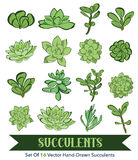 Vector Succulents Hand Drawn 16 Set Seamless Stock Photos