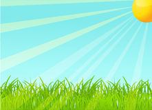 Vector summer background Stock Photo