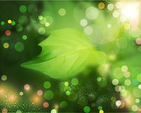 Vector summer background with green, blur and leaf Royalty Free Stock Photo