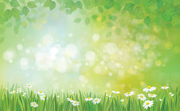 Vector summer background. Stock Images