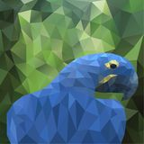 Vector summer background with polygonal parrot Stock Images