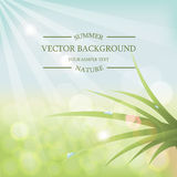 Vector summer background with sunlight Royalty Free Stock Image