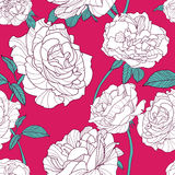 Vector summer background with white outline rose flowers. Floral seamless pattern. Stock Photos