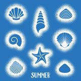 Vector summer card with sea shells Royalty Free Stock Photography