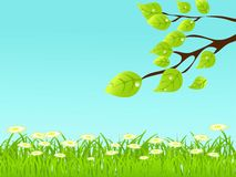 Vector summer color background with tree Stock Images
