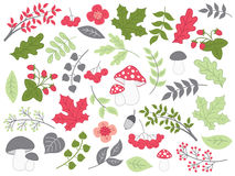 Vector Summer Forest Set with Strawberries, Mushrooms, Leaves and Flowers. Vector summer forest set with berries, mushrooms, flowers, strawberries, amanita,  oak Royalty Free Stock Images