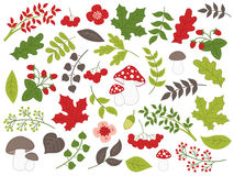 Vector Summer Forest Set with Strawberries, Mushrooms, Leaves and Flowers. Vector summer forest set with , berries, mushrooms, flowers, strawberries, amanita Stock Photography