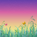 Vector summer grass and sky background. Nice shiny fresh butterfly dusk sky grass lawn with bokeh blur effect sunshine beam background. Nature spring summer Stock Photography