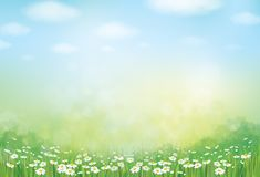 Vector summer, green, nature background. Vector summer, green, nature background, daisy flowers field stock illustration