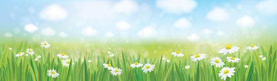 Vector summer landscape, blue sky , meadow with chamomiles. Royalty Free Stock Image
