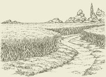 Vector summer landscape. Dirt path through fields of wheat Stock Images