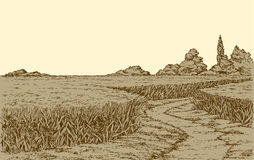 Vector summer landscape. A dirt path through fields of wheat Royalty Free Stock Image