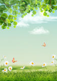 Vector Summer landscape. With grass, flowers, tree branches, butterfly Stock Photography