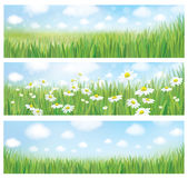 Vector summer landscapes, blue sky , meadow and chamomiles. Background for season,nature design etc Stock Photos
