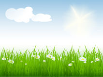Vector summer meadow Stock Image