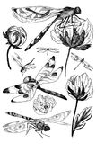 Set of vector floral elements with black and white hand drawn herbs, wildflowers and dragonfly in sketch style. Vector summer meadow set. Flowers, dragonfly stock illustration