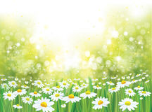 Vector summer nature  background. Royalty Free Stock Photos