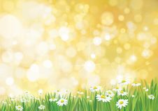 Vector summer, nature background. Vector summer, nature background, daisy flowers field on sun shine background royalty free illustration