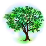 Vector summer tree Royalty Free Stock Image