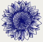 Vector sunflower Royalty Free Stock Images