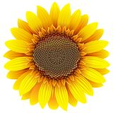 Vector Sunflower Icon stock illustration