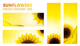Vector sunflowers banner. Set with empty space Royalty Free Stock Photos