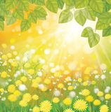 Vector of sunny background with dandelions and gre Royalty Free Stock Image