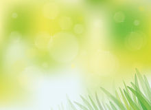 Vector sunny spring background with grass. Stock Photos