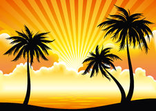 Vector sunset coastline. Sunset coast with palm-trees. EPS8 vector Stock Image