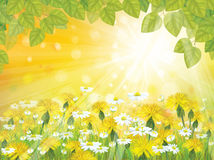 Vector sunshine background with branches of  leave Stock Image