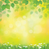 Vector sunshine background with chamomile and dandelion. Royalty Free Stock Image