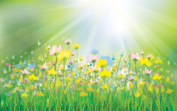 Vector sunshine background with colorful flowers. Stock Photos