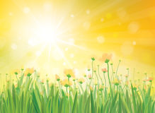 Vector sunshine background with yellow flowers. Background is my creative handdrawing and you can use it for spring, summer design and etc, with space for text Stock Photos