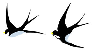 Vector Swallow Birds Royalty Free Stock Images