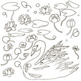 Vector swan and water plants Royalty Free Stock Photos