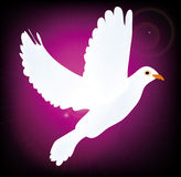 Vector symbol of peace pigeon Stock Image
