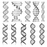 Vector symbols of dna helix or molecular chain. DNA or RNA helix vector isolated icons. Symbols of chromosome cell molecule, molecular chain of human genes or Royalty Free Stock Photos