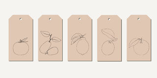 Vector tag set with vintage hand drawn line citrus fruits. Stock Photos
