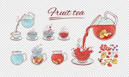 Vector tea constructor fruits brew process. Make and pour in transparent cup hot or cold aromatic drink with different. Berries. Sketch set collection hand vector illustration