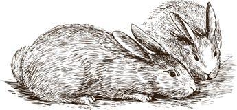 Twee konijnen Stock Afbeelding