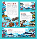 Vector template for fresh fish seafood market. Fresh fish poster or banners templates for seafood or fish food market or shop. Vector set of fishing big catch of Royalty Free Stock Images